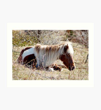 Nap in the Sunshine - Grayson Highlands Ponies Art Print