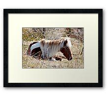 Nap in the Sunshine - Grayson Highlands Ponies Framed Print