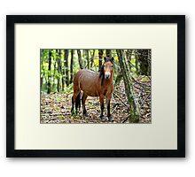 Fox - Grayson Highlands filly Framed Print