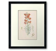 A Monograph of the Genus Lilium Henry John Elwes Illustrations W H Fitch 1880 0089 Framed Print