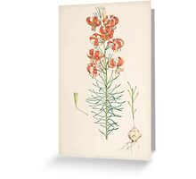A Monograph of the Genus Lilium Henry John Elwes Illustrations W H Fitch 1880 0089 Greeting Card