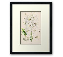 A Monograph of the Genus Lilium Henry John Elwes Illustrations W H Fitch 1880 0085 Framed Print