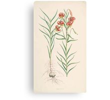 A Monograph of the Genus Lilium Henry John Elwes Illustrations W H Fitch 1880 0123 Canvas Print