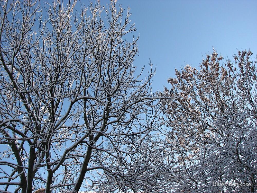 December Morning by BlueMoonRose