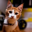 Hi, my name is Cico by ianhar