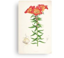 A Monograph of the Genus Lilium Henry John Elwes Illustrations W H Fitch 1880 0147 Canvas Print