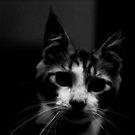Cico black&white by ianhar