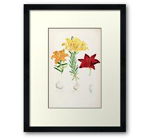 A Monograph of the Genus Lilium Henry John Elwes Illustrations W H Fitch 1880 0173 Framed Print