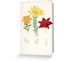 A Monograph of the Genus Lilium Henry John Elwes Illustrations W H Fitch 1880 0173 Greeting Card