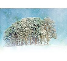 Snow Flakes Fall. Photographic Print