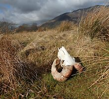 Horns - Lake District by shutterclick