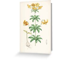 A Monograph of the Genus Lilium Henry John Elwes Illustrations W H Fitch 1880 0155 Greeting Card