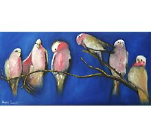 A BUNCH OF GALAHS Photographic Print