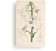 A Monograph of the Genus Lilium Henry John Elwes Illustrations W H Fitch 1880 0065 Canvas Print