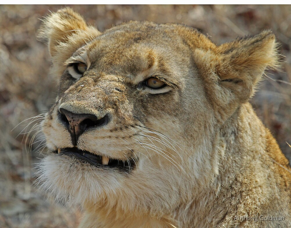 Smiling lioness of the ximungwe pride by jozi1