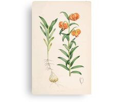 A Monograph of the Genus Lilium Henry John Elwes Illustrations W H Fitch 1880 0081 Canvas Print