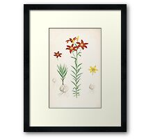 A Monograph of the Genus Lilium Henry John Elwes Illustrations W H Fitch 1880 0199 Framed Print