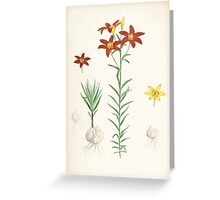 A Monograph of the Genus Lilium Henry John Elwes Illustrations W H Fitch 1880 0199 Greeting Card