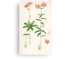 A Monograph of the Genus Lilium Henry John Elwes Illustrations W H Fitch 1880 0195 Canvas Print