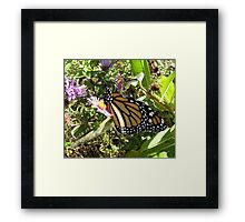 monarch butterfly beginnings Framed Print