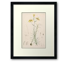 A Monograph of the Genus Lilium Henry John Elwes Illustrations W H Fitch 1880 0055 Framed Print