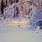Winter's Magic by cherylc1