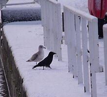 Friends In The Snow by Nigel G Owen