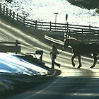 Draft Horse Crossing by Geno Rugh