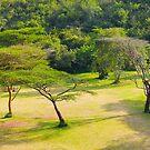 Masai Lodge Park, KENYA by Atanas NASKO