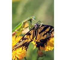 Mantid and Monarch Photographic Print