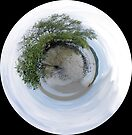 Mangrove world by Jayson Gaskell