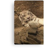 Layed Back Canvas Print