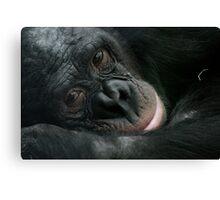 Sleepy Chimp Canvas Print