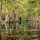 Reflections in Texas Hill Country by Robert Kelch, M.D.