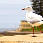 Seagull by Tim Oliver