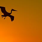 Flight of the Pelican by Eyal Nahmias