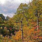 Treescape, Japan Alps. by johnrf