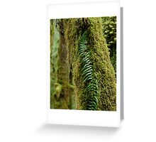 Fern In Golden Ears Park 2 Greeting Card