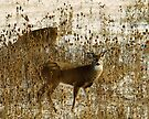 Whitetail Couple by Rodney55