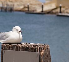 Even a gull has to sit down occasionally by georgieboy98
