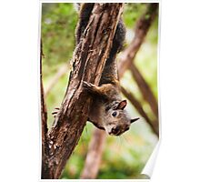 Squirrel Tree 1 Poster