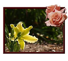 Daylilly & Rose at Tregarthen April 2010 Photographic Print