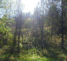 Tranquil Forest by heyginny