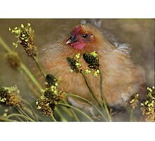 """""""Chickies in the Grasses ..."""" Photographic Print"""
