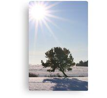 Sunburst on Winter Canvas Print