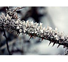 Iced Thorns Photographic Print