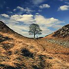 Sycamore Gap by Paul Alsop