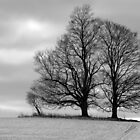 Two Trees and a Bush by BarbL