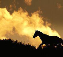 He Gallops Through The Heavens by Jeanne  Nations