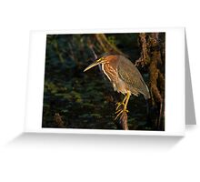 Perched for Fishing  Greeting Card